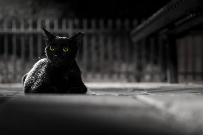 Scary Little Girl Wallpaper Motives For Murder In Edgar Allan Poe S The Black Cat