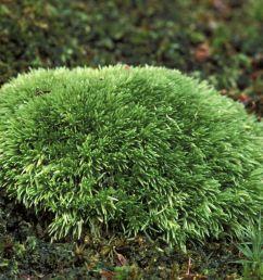 club mos plant diagram [ 1500 x 1000 Pixel ]