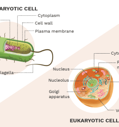 typical eukaryotic cell diagram [ 1500 x 1000 Pixel ]