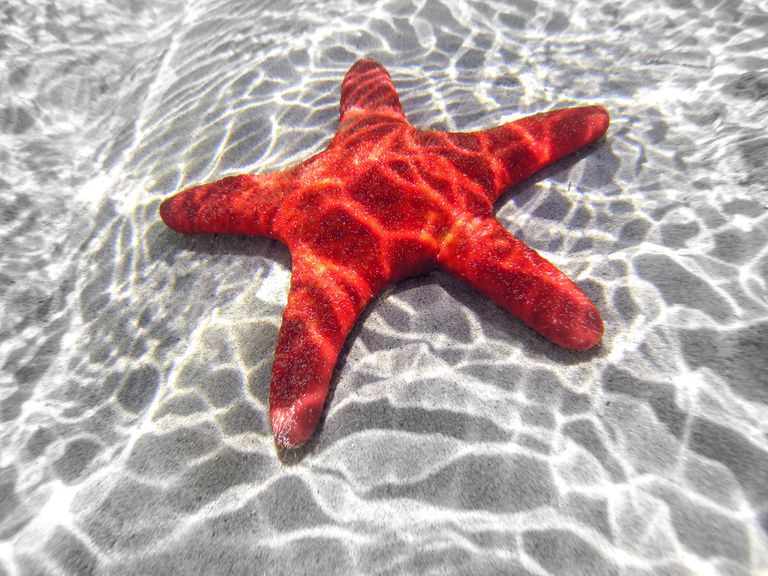 learning about starfish