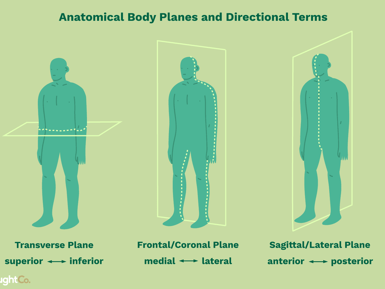 Anatomical Planes Of The Skull