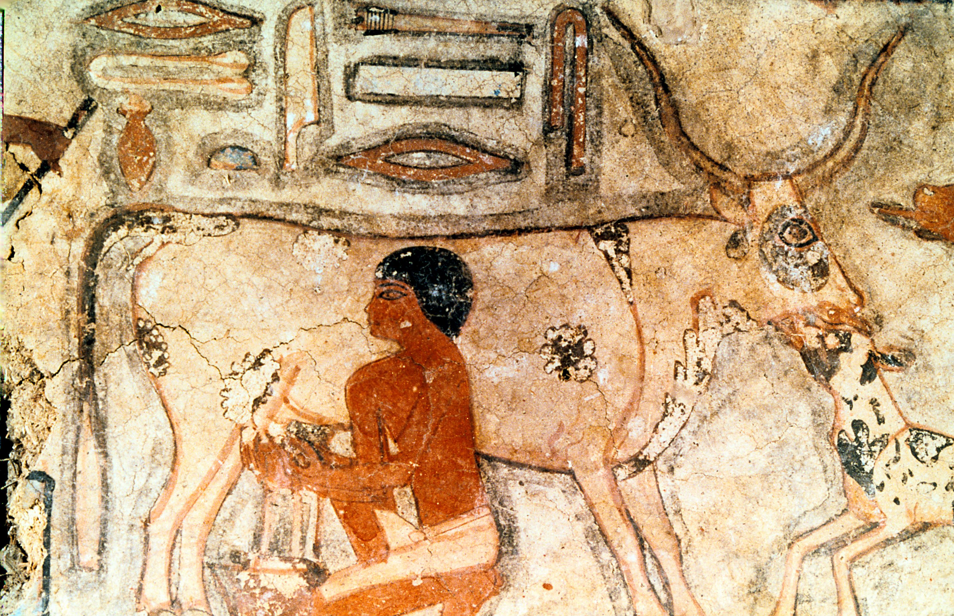 Dairy Farming The Ancient History Of Producing Milk