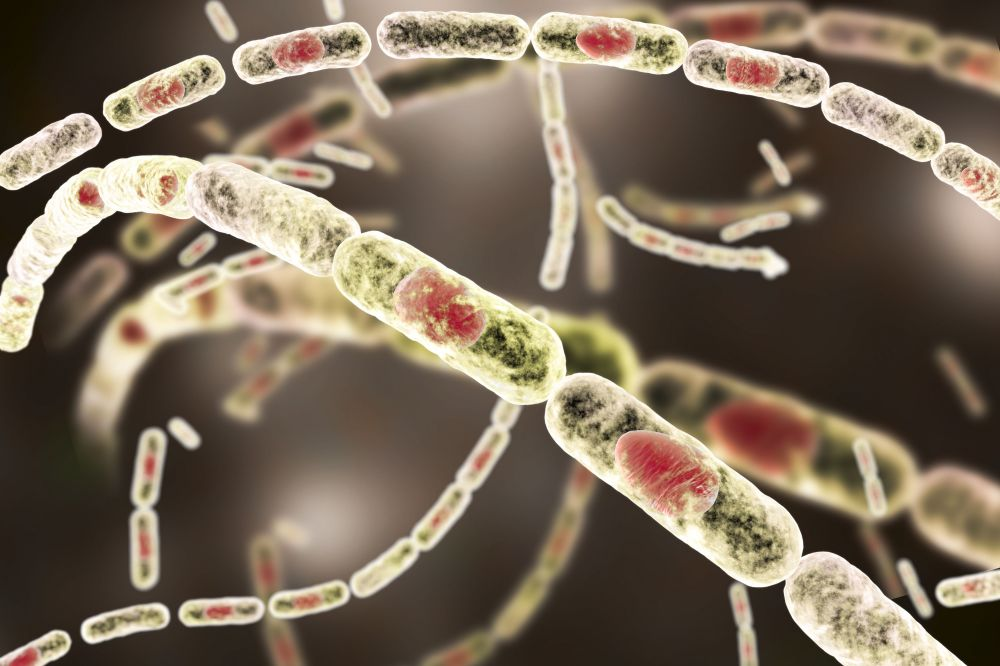 medium resolution of the anthrax bacteria are rod shaped bacteria that produce spores