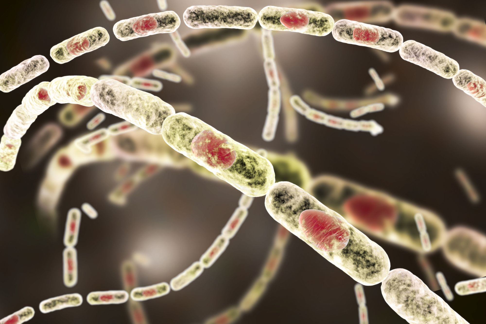 hight resolution of the anthrax bacteria are rod shaped bacteria that produce spores
