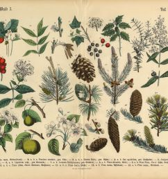 forest and fruit trees and plants victorian botanical illustration [ 3611 x 2757 Pixel ]