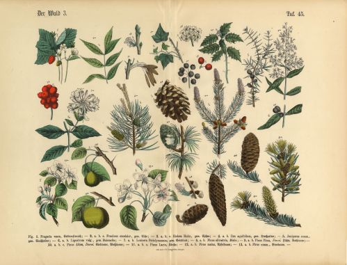 small resolution of forest and fruit trees and plants victorian botanical illustration