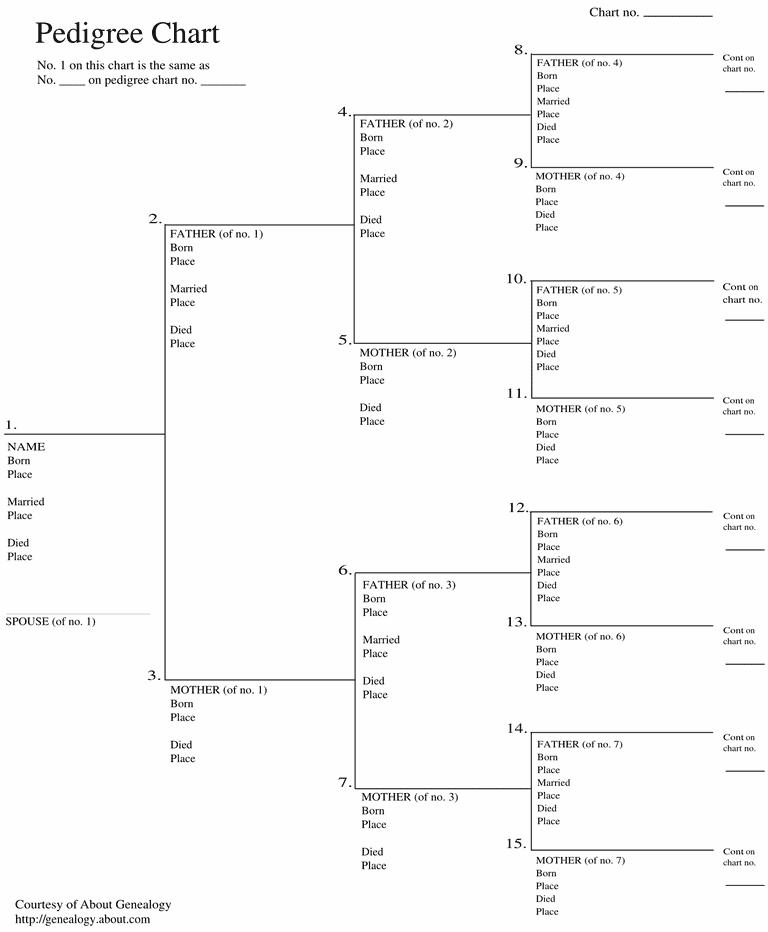 8 Generation Fan Family Tree Template