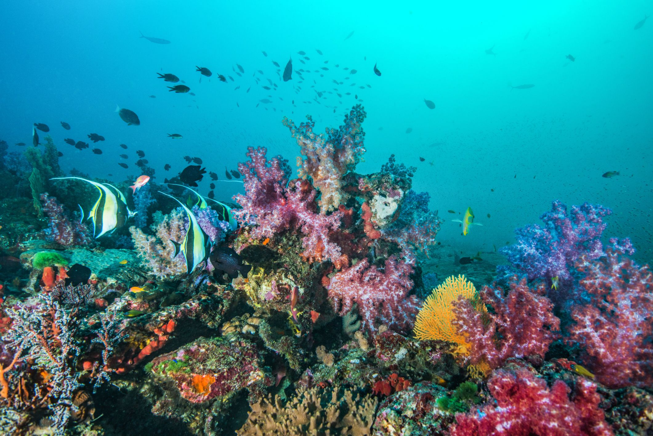 How Are Coral Reefs Formed