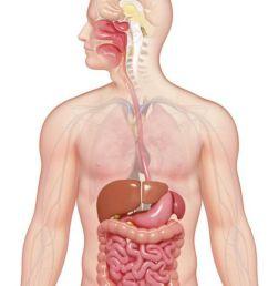 digestive system diagram fill in [ 1500 x 844 Pixel ]