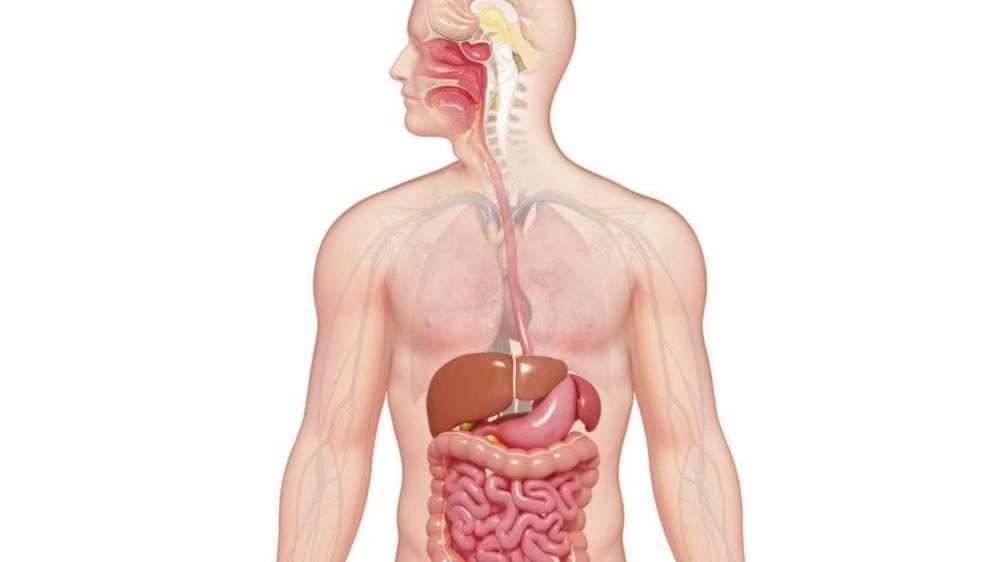 medium resolution of digestive system diagram fill in