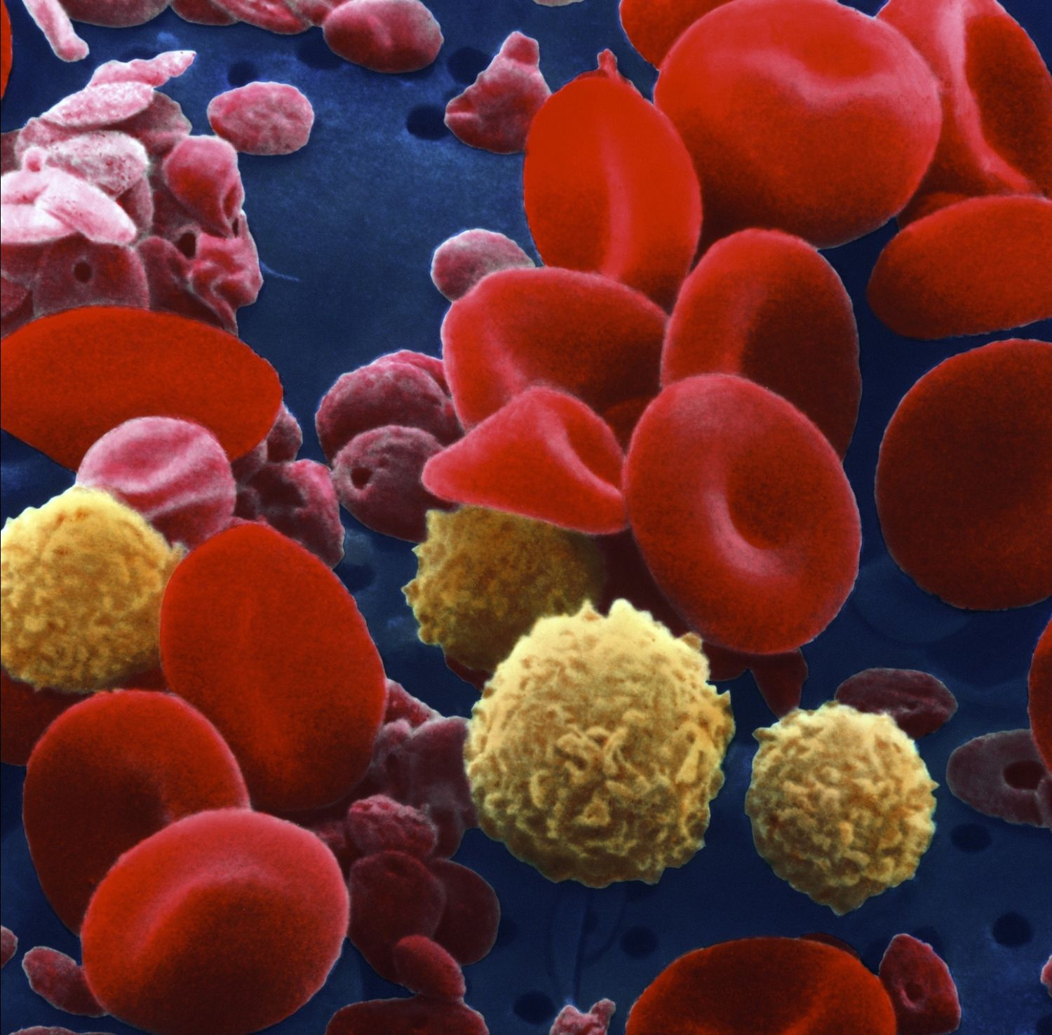 Blood Components And Blood Cell Production