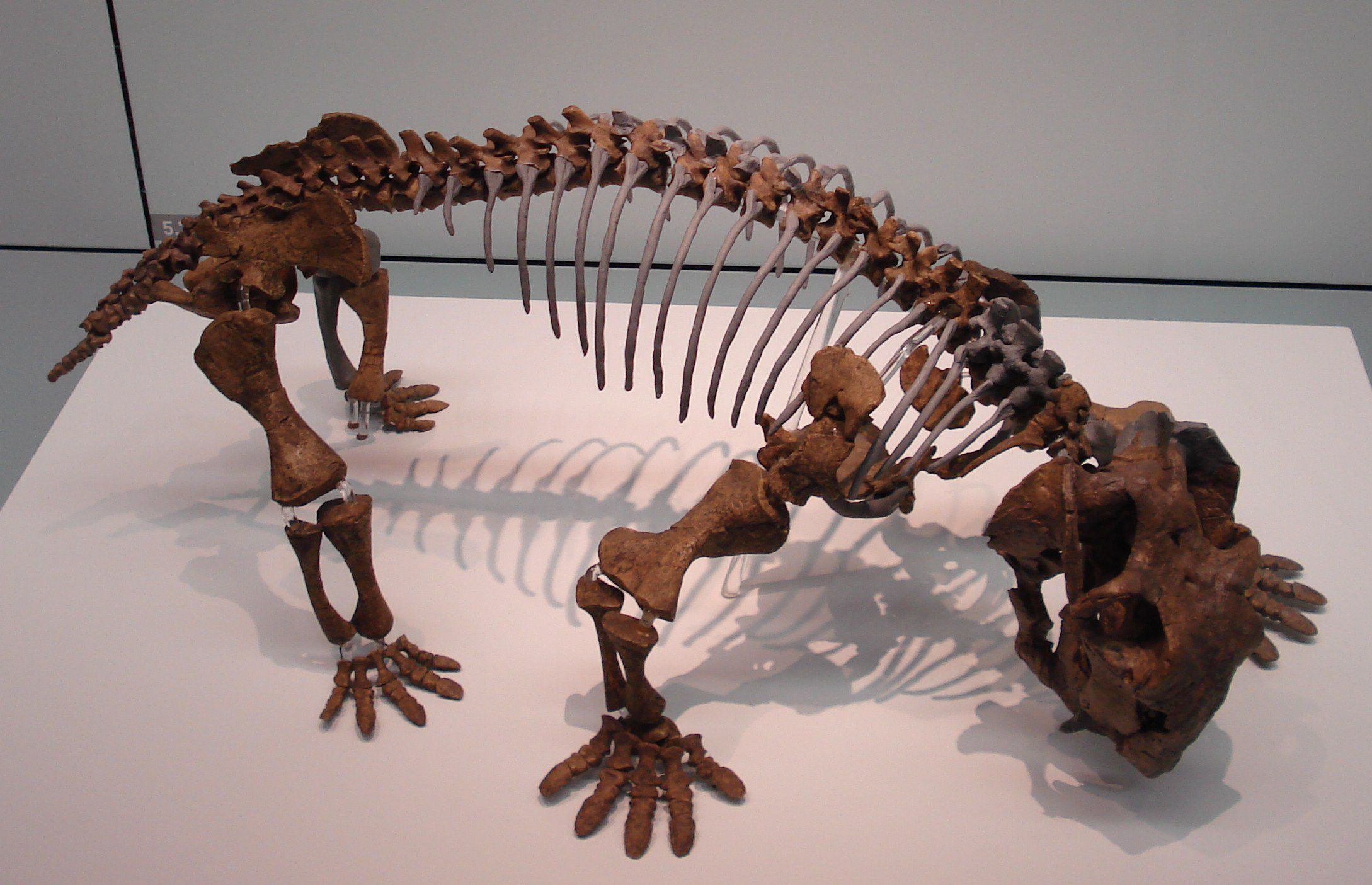 Lystrosaurus Facts And Figures