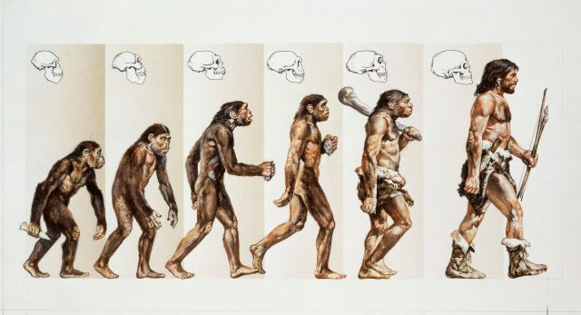 are humans monkeys