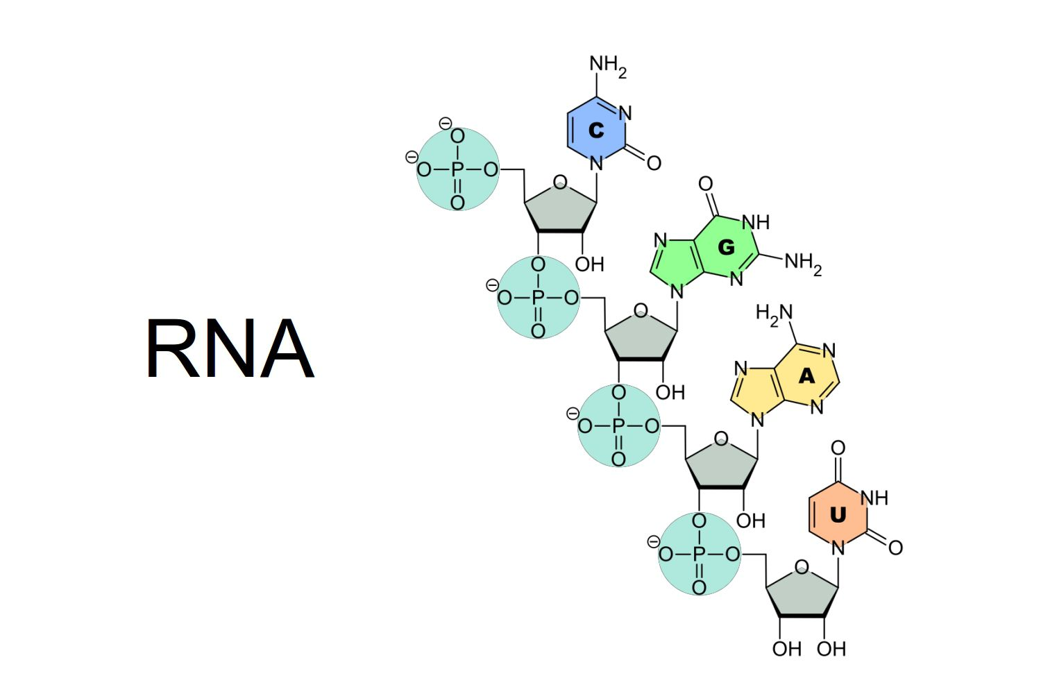 hight resolution of rna structure