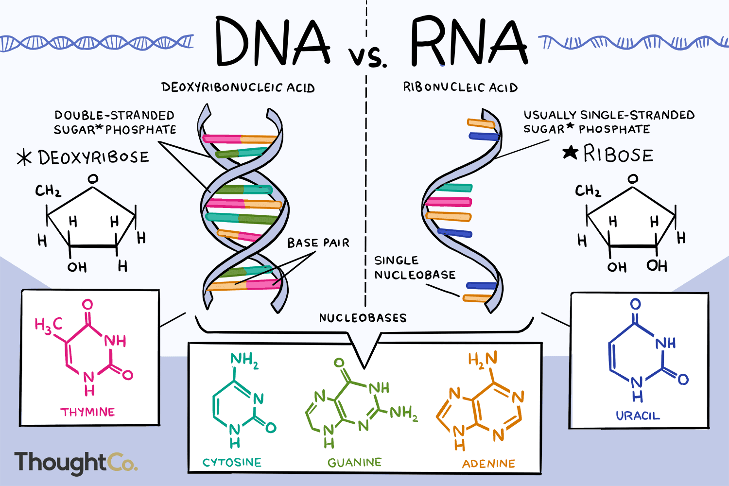 Dna Replication Coloring 12 2 Answer Key