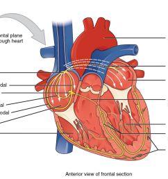 muscle part diagram [ 1500 x 1000 Pixel ]