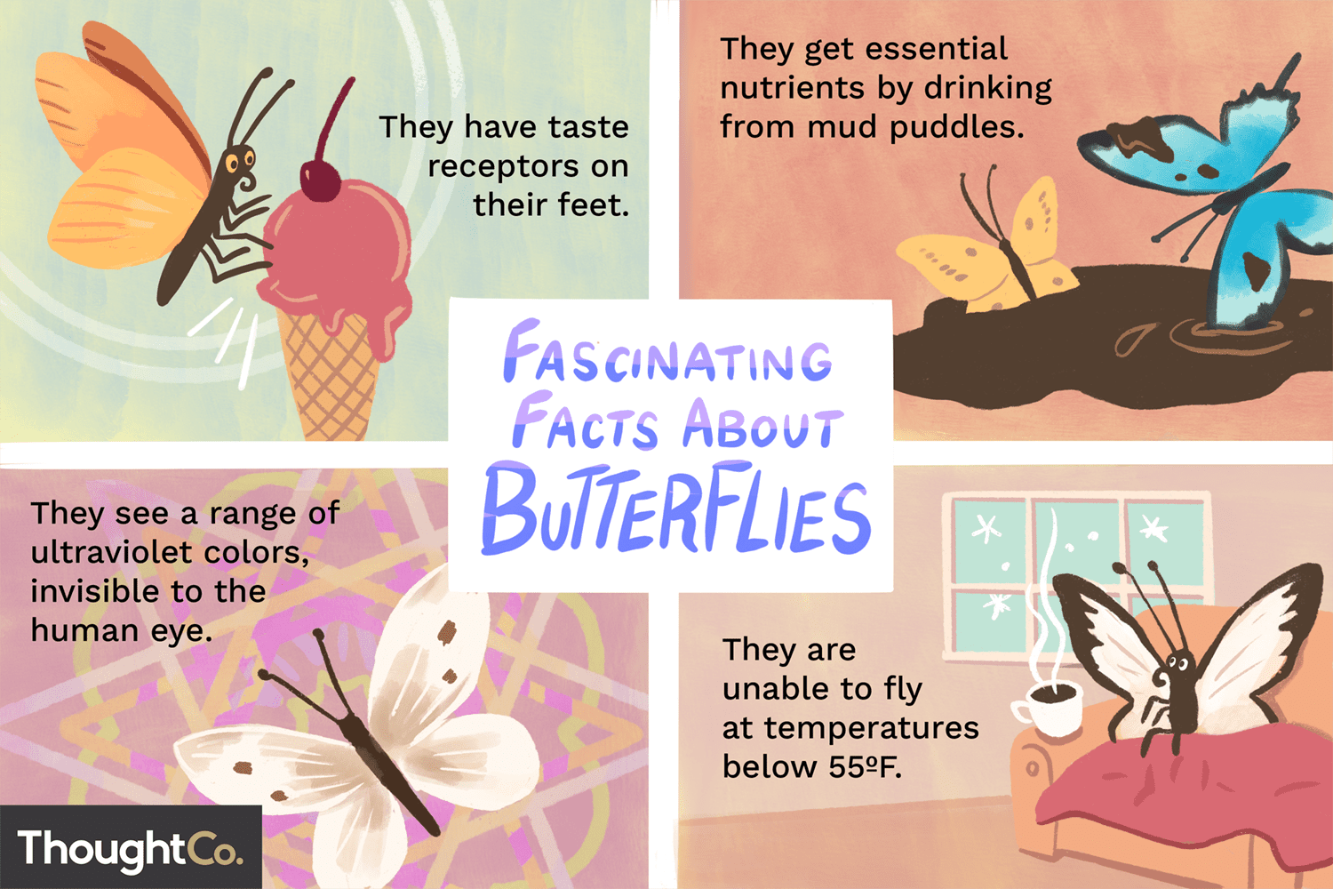 10 Fascinating Facts About Butterflies