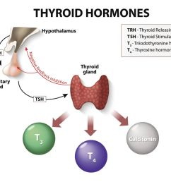 thyroid hormone production and regulation [ 1500 x 1000 Pixel ]