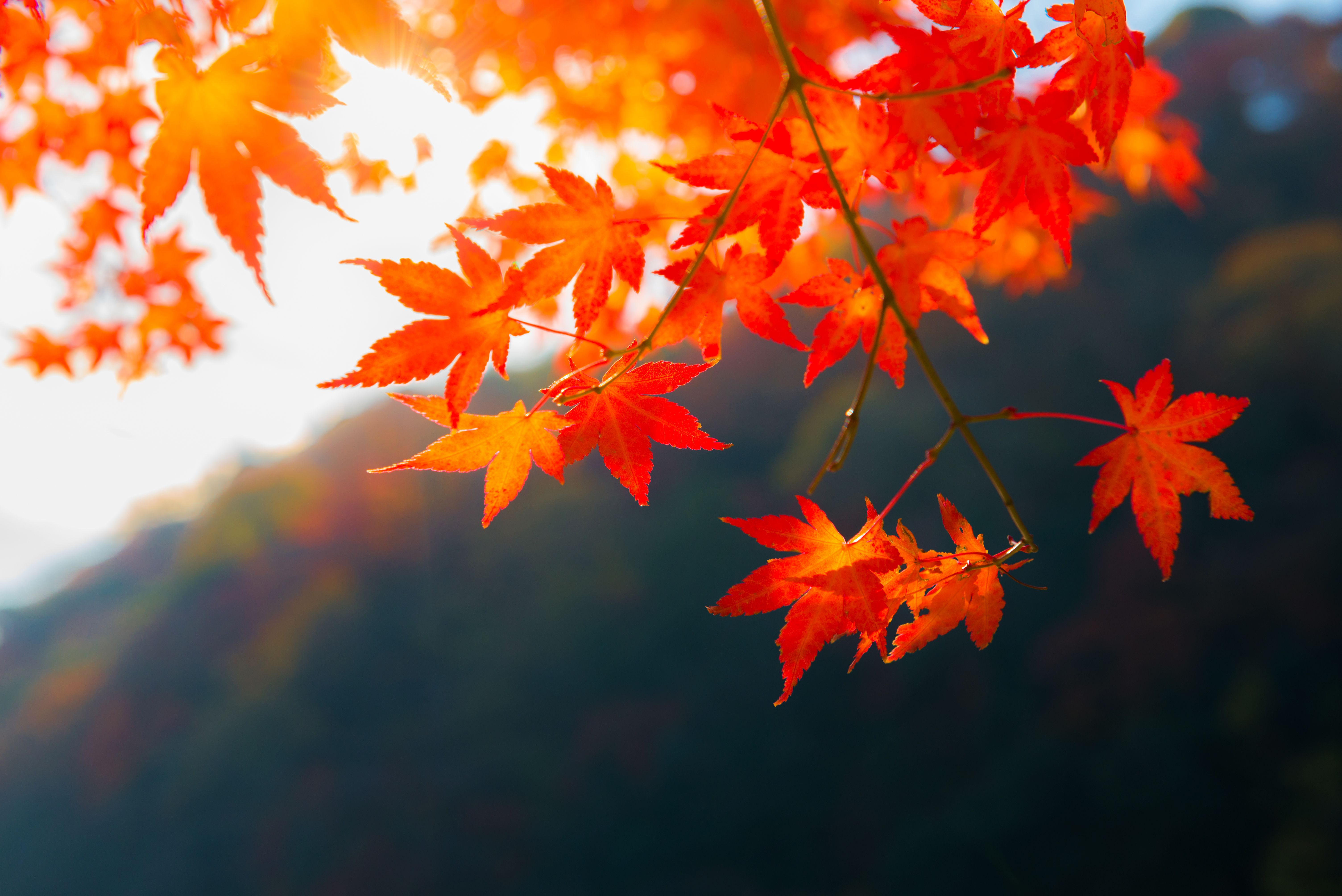 Literature Quotes Wallpapers Why Do Leaves Change Color In The Fall