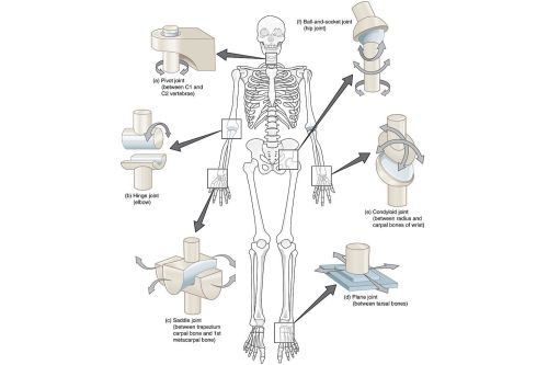 small resolution of synovial joint types