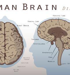 liver lobe diagram labeled [ 3389 x 3389 Pixel ]