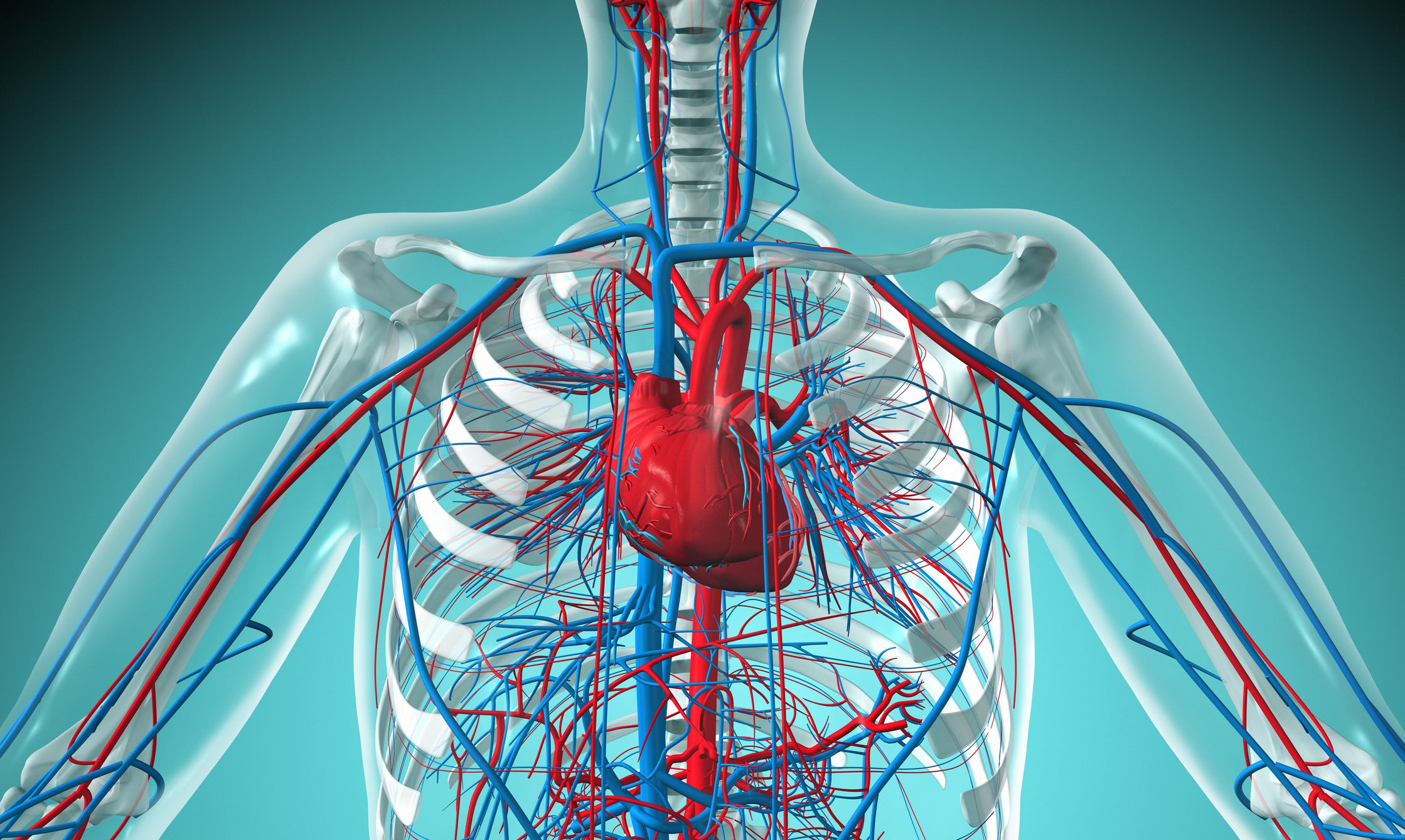 Types Of Circulatory Systems Open Vs Closed