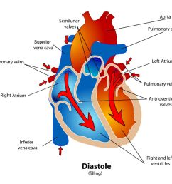 diagram of the heart during the diastole phase of the cardiac cycle  [ 1500 x 1000 Pixel ]