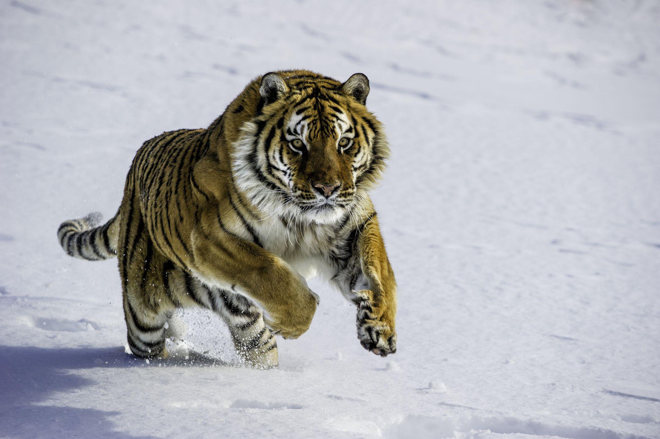 Take This Endangered Species Quiz