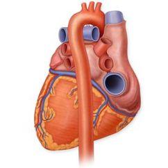 Interior Heart Diagram 2001 Dodge Durango 4x4 Wiring Anatomy Of The View Human Posterior