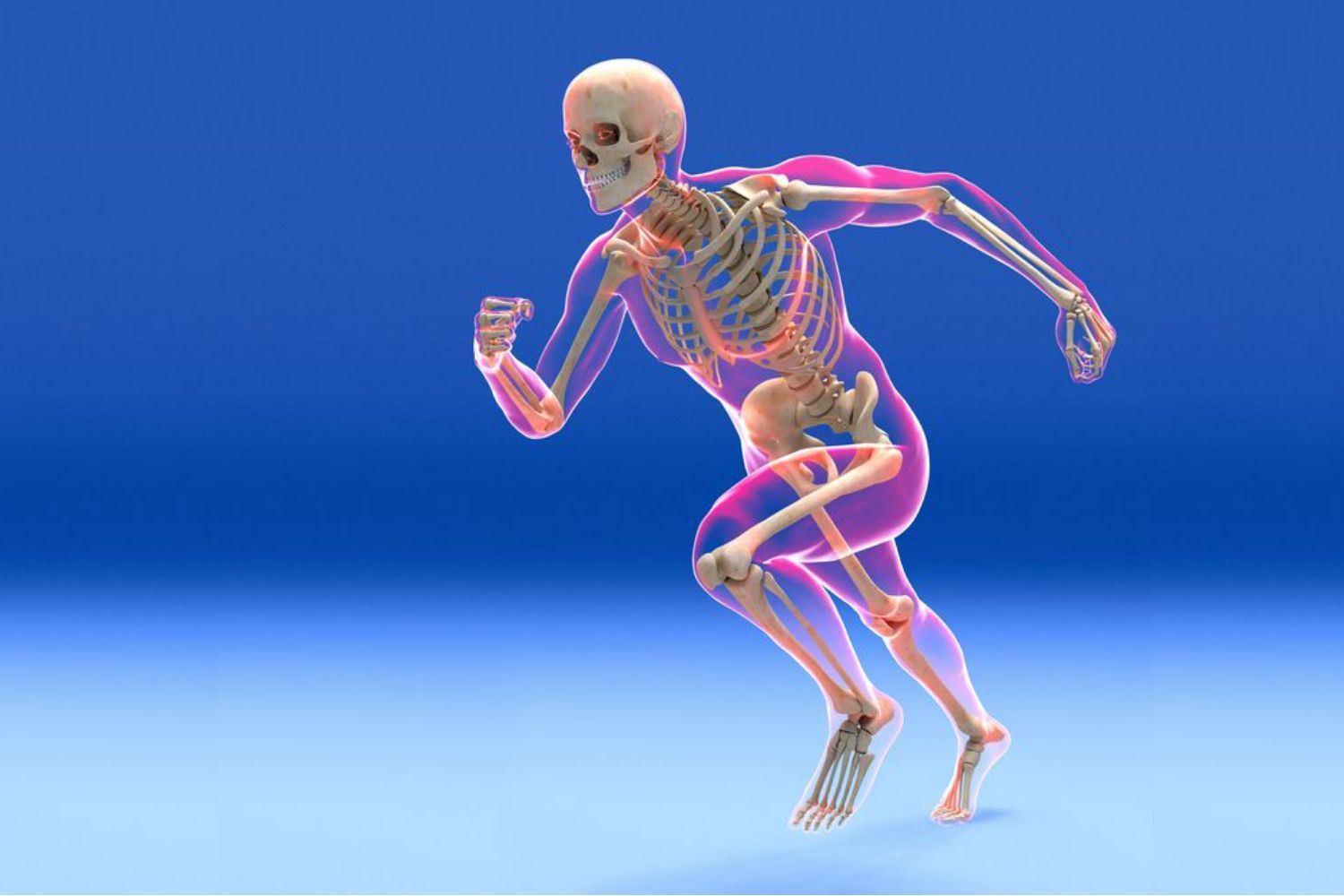 Skeletal System Function And Components
