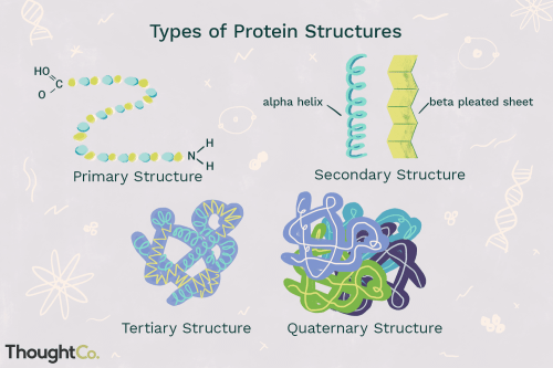 small resolution of protei structure diagram