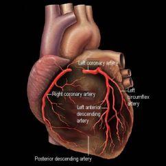 Coronary Arteries Diagram Branches Sonata Form And Heart Disease