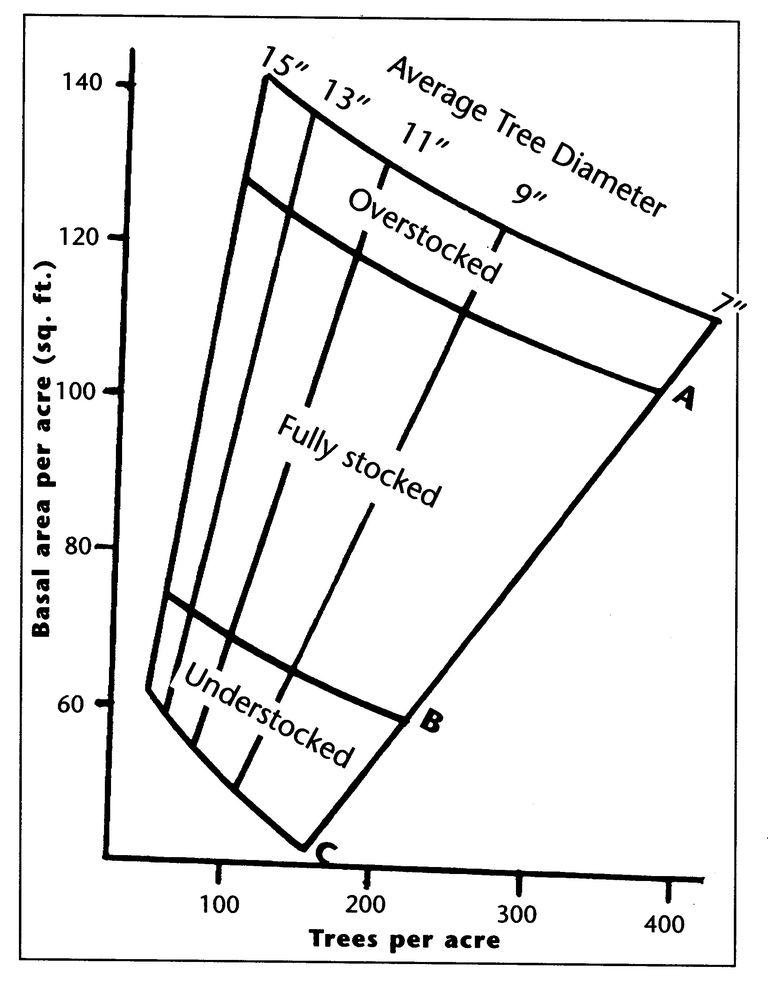 Understanding Forest Basal Area