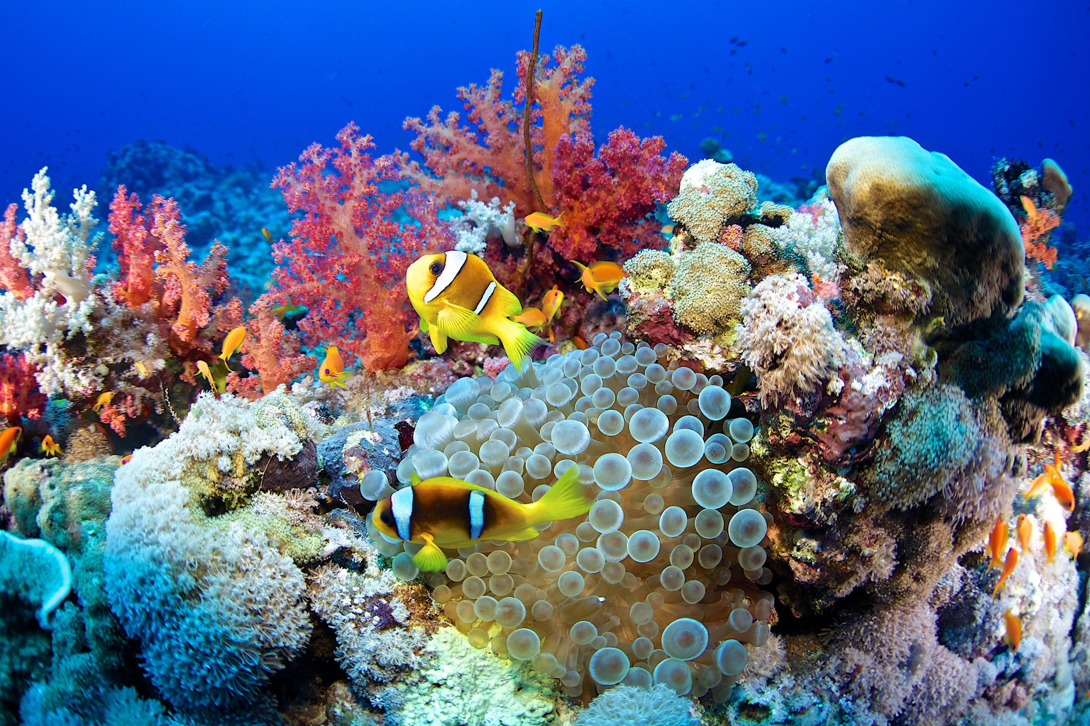Types Functions And Conservation Of Coral Reefs