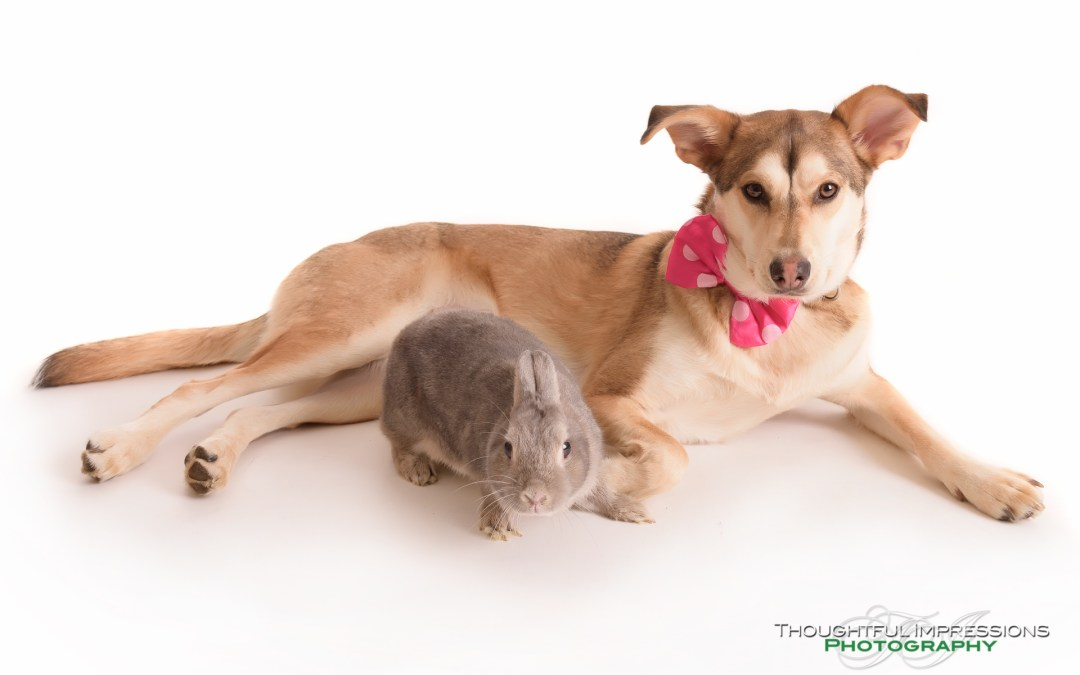 Pet Portraits – Sitka & Stu