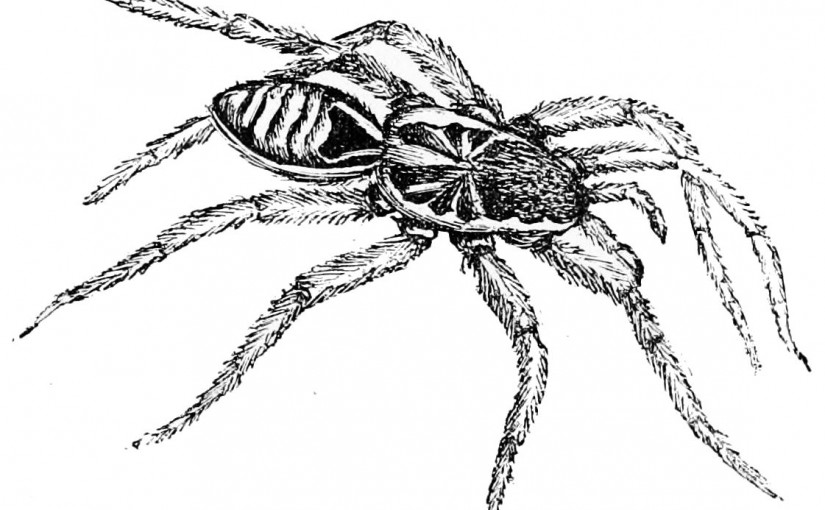 #Wizardry8 #TLDR #Tactics #8 : Squatting Spiders! (Don't
