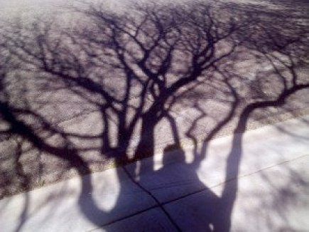 Legacy Tree Shadow