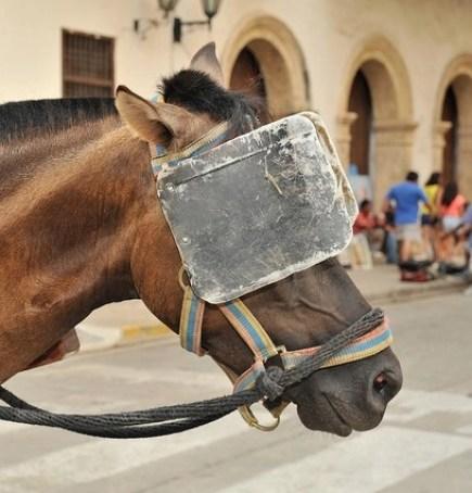 Horse Wearing Large Blinders