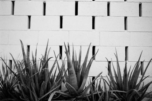 PALM SPRINGS ON FILM | PHOTO NATIVE 2019 | THOUGHTSBYBRANDI.COM