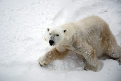 white bear thought suppression