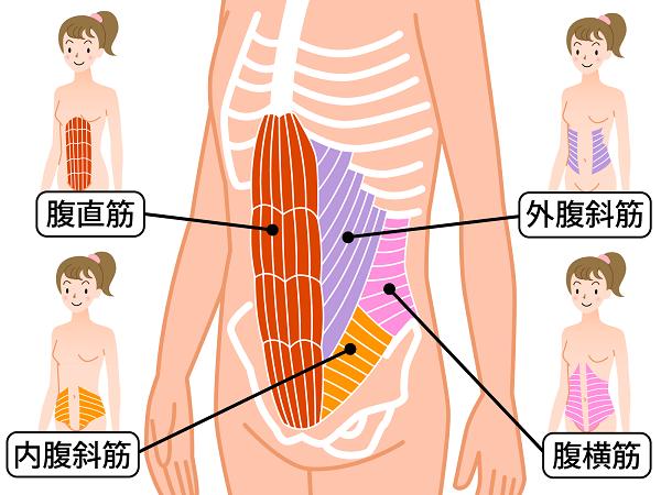 お腹の筋肉