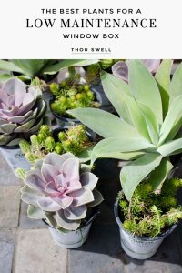 The Best Plants for a Low Maintenance Window Box