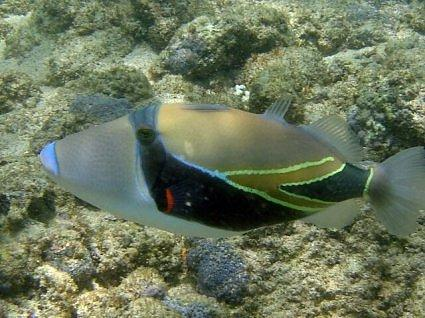 Review of hanauma bay nature preserve oahu hawaii world for Plenty of fish oahu