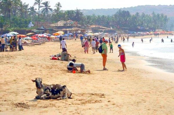 Anjuna Beach Report, Goa, India