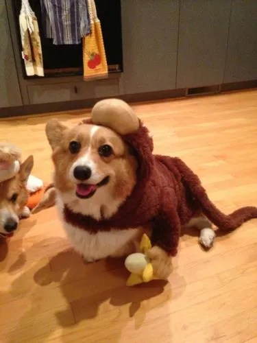 Dogs in Costumes