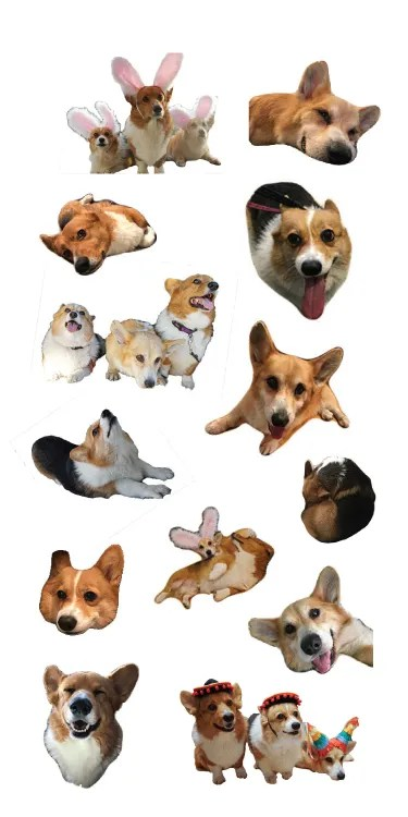 three corgis sticker