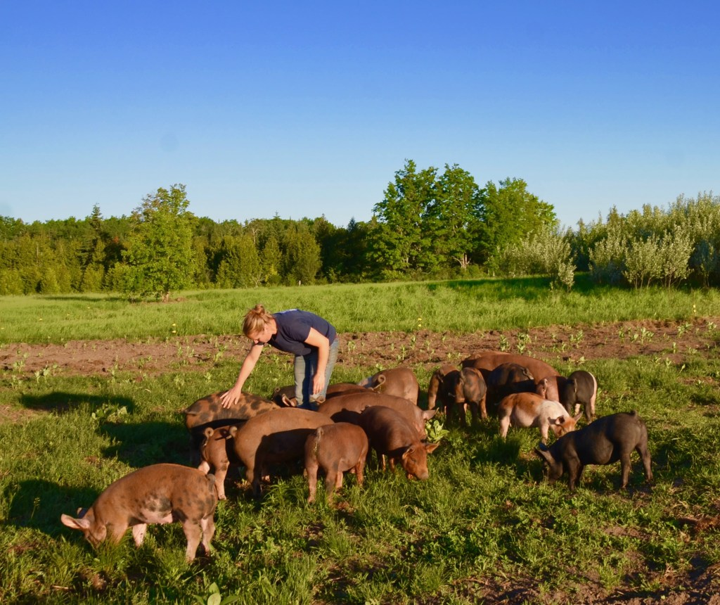 Responsible Farming - Caring for Animals - Three Forks Farm - Bobcaygeon Farm, Kawartha Lakes
