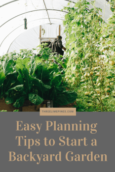 6 Easy Steps To Planning Your Garden