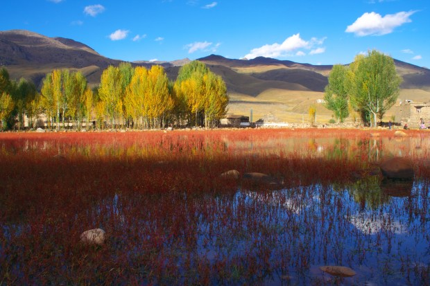 Red Forest of Daocheng
