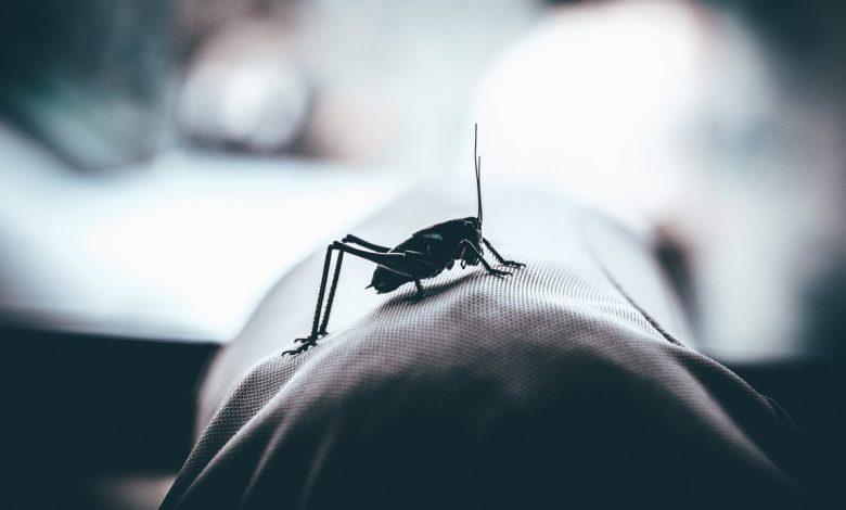 Κουνούπια: 7 λόγοι που τσιμπούν εσάς και όχι τον διπλανό σας